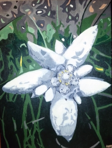 edelweiss flower painting